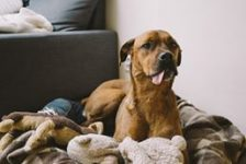 these are the best fabrics to use in a pet friendly home