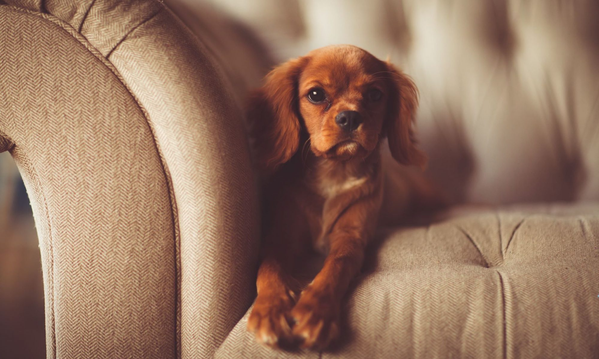 worst fabrics to use in a pet friendly home