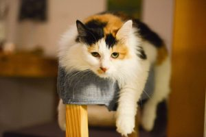 worst fabrics for pets, don't use these fabrics in a pet friendly home