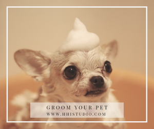 Bathe your dog regularly to prevent dog smell.