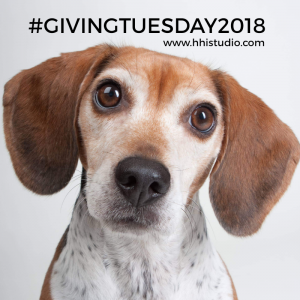 I miss Pebbles daily. But, I'm determined to celebrate the life I had with her, and that includes giving back with GivingTuesday2018!