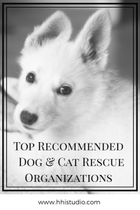 I'm often asked about the groups or organizations that I recommend, so I've compiled a list for easy reference. This is a living post, meaning that I'll continue to add and update, as often as I need to. This list includes local, national, and global organizations. Here are my top dog and cat rescue organizations that I support and highly recommend!