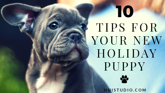 if you're a new puppy owner, here are 10 tips just for you!