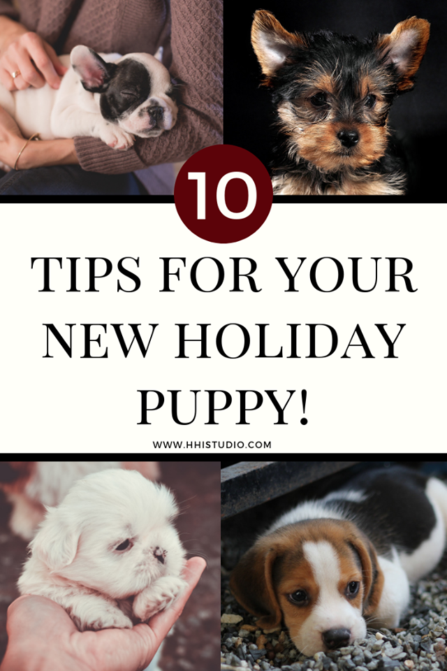 four images of different puppies; if you got a new holiday puppy, then these tips are for you!